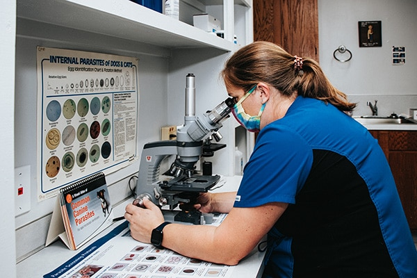 Woman looking through a microscope