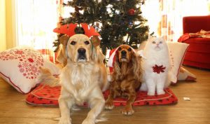 Dogs under the Christmas tree
